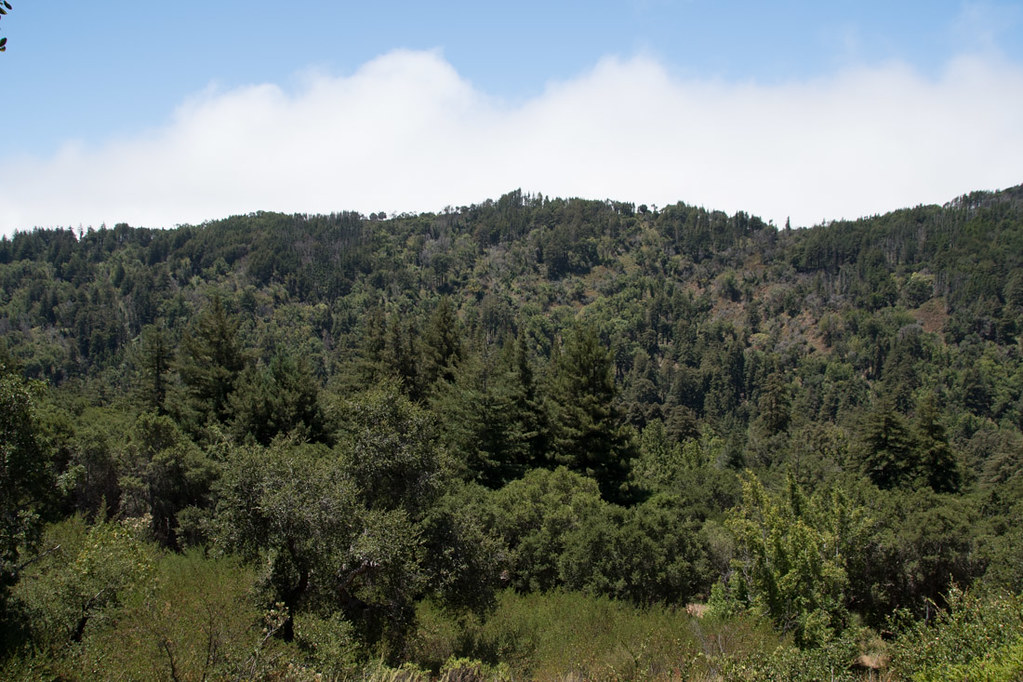 Trail hikes at Pfeiffer Big Sur State Park