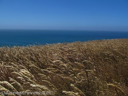 Waving grasses atop the headlands at Point Arena-Stornetta National Monument, California