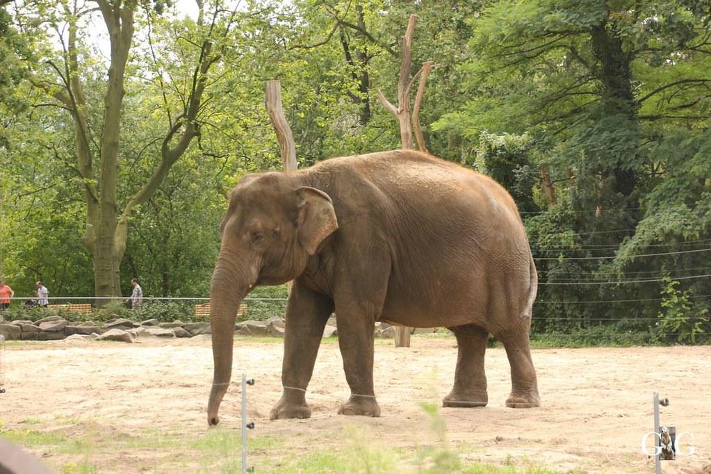 Besuch Zoo Berlin 13.08.17136