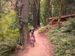 Scenes from the wooded descent on the SE side of Powell Butte. Featuring 100% less Kyle MacLachlan! #powellbutte