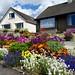 An Englishman's Garden