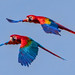 Macaws painting the sky by FotoGrazio