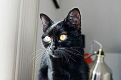 Krazy Kitty
