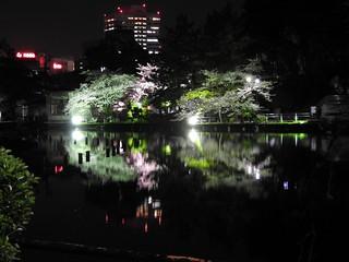 千葉公園綿打池 夜桜ライトアップ08