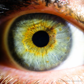 #ojo #eye #2016 #pupila #pupil #pestañas #eyelashes #azul #blue #verde #green #amarillo #yellow #amor #love #hermana #sister #macro #photography #photographer #iphone #iphone5