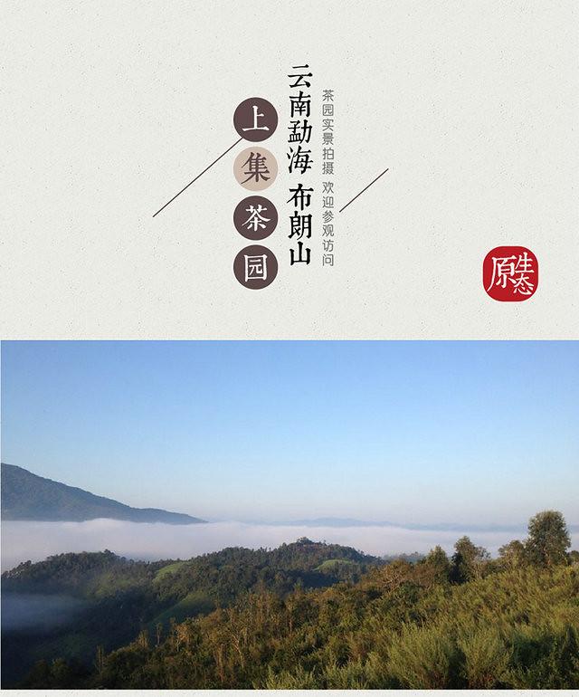 Free Shipping 2015 ShangJi ShangPin High Grade 357g China YunNan MengHai Chinese Organic Puer Puerh Ripe Tea Shou Shu Cha