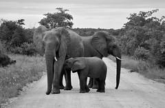 Elephant family // South Africa