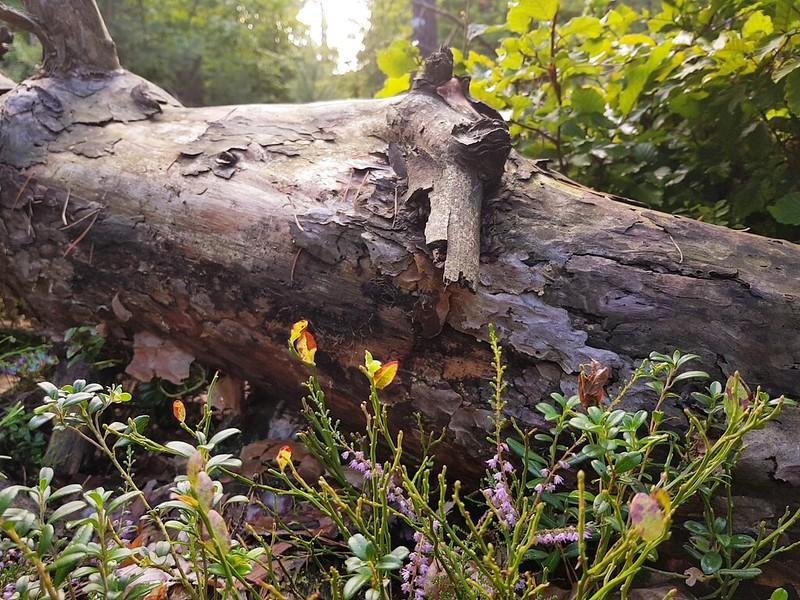 Mit dem S8 im Wald
