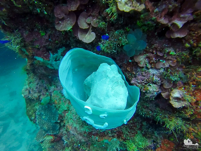 Frogfish in a Sponge