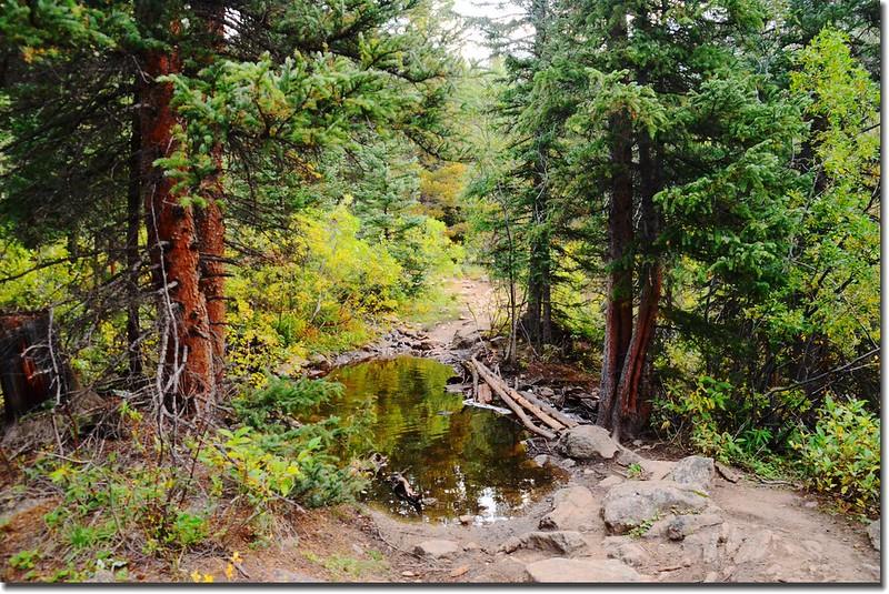 Crossing log bridge at Denny Creek 2