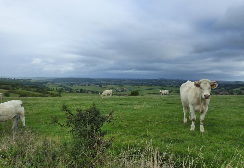 A travers le Bourbonnais, le Beaujolais et la Bourgogne... 37338821355_e123bb88f4_c