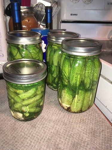 Lacto-fermented pickles, day 1