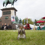 The Book Festival isn't just for humans... |