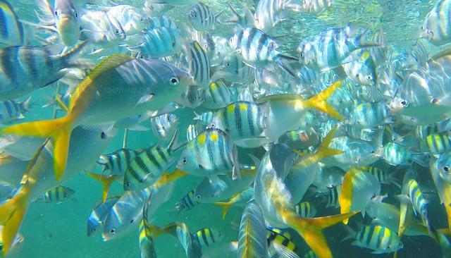 paya beach resort snorkeling activity