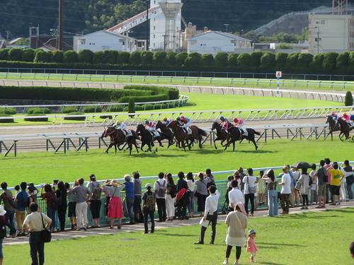 小倉競馬場の芝コース直線