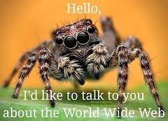 #spider #spiders #joke #funny #meme #mademelaugh #couldntresist #funnymemes #cute #cutespider #haha #lol #worldwideweb #www #web #theoriginalwebdesigner #arachnid