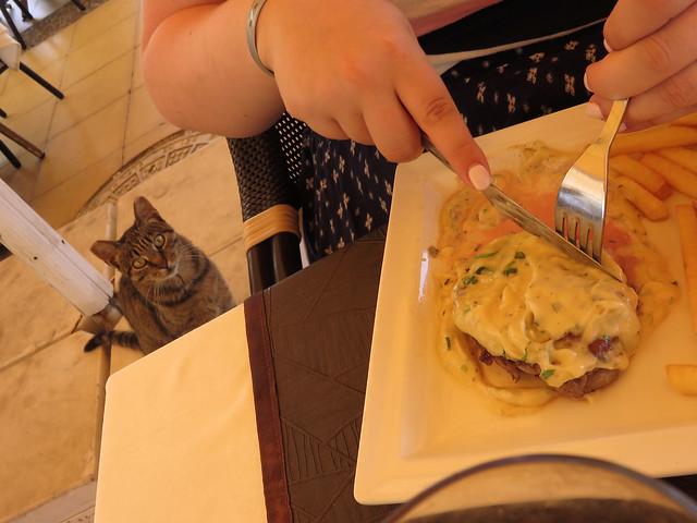 Restaurant Cat 2, Canon POWERSHOT SX700 HS