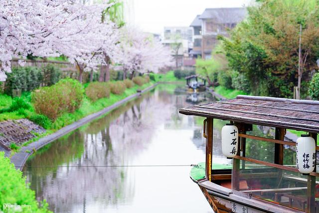 十年,京都四季 | 卷四 | 那兒春色滿城 | 12