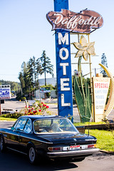 Check in at the Daffodil Motel
