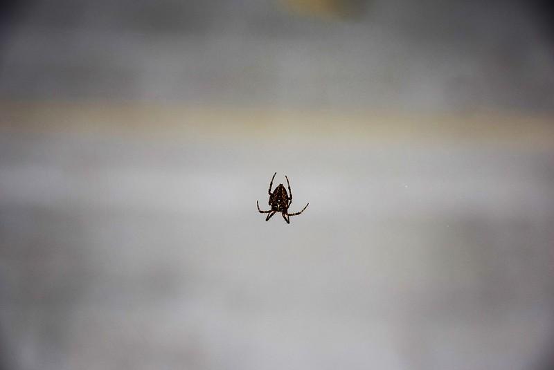 Spider 16.08.2017