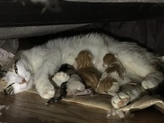Three little kittens went to dinner
