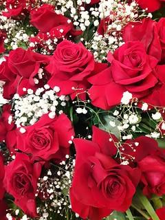 Rosas rojas para mamá