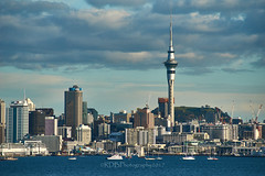 Auckland Waterfront  11