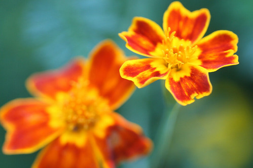 garden flowers IMG_7036