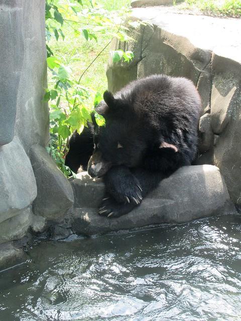 Bear_nap