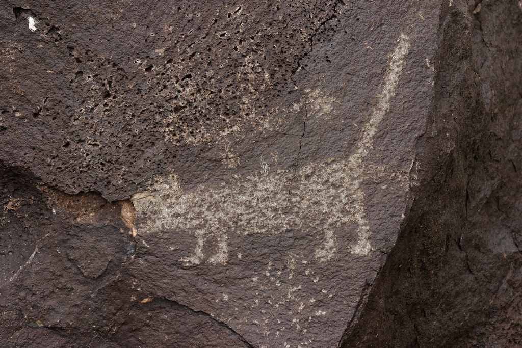A petroglyph of a cat along the Rinconada Canyon Trail at Petroglyph National Monument in New Mexico