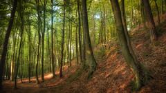 Masurian Forest