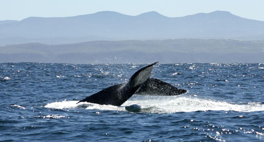 Rondreis Zuid-Afrika: walvissen zien, Tuinroute | Mooistestedentrips.nl
