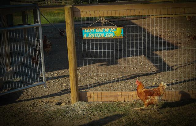 Central Park Farms #CentralParkFarms #ExploreBC #ExploreLangley #LangleyFresh