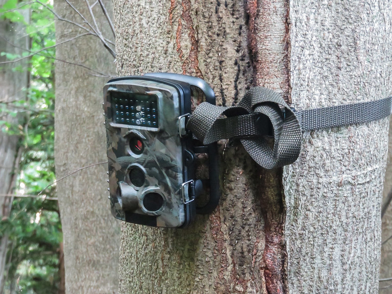 Our trail camera
