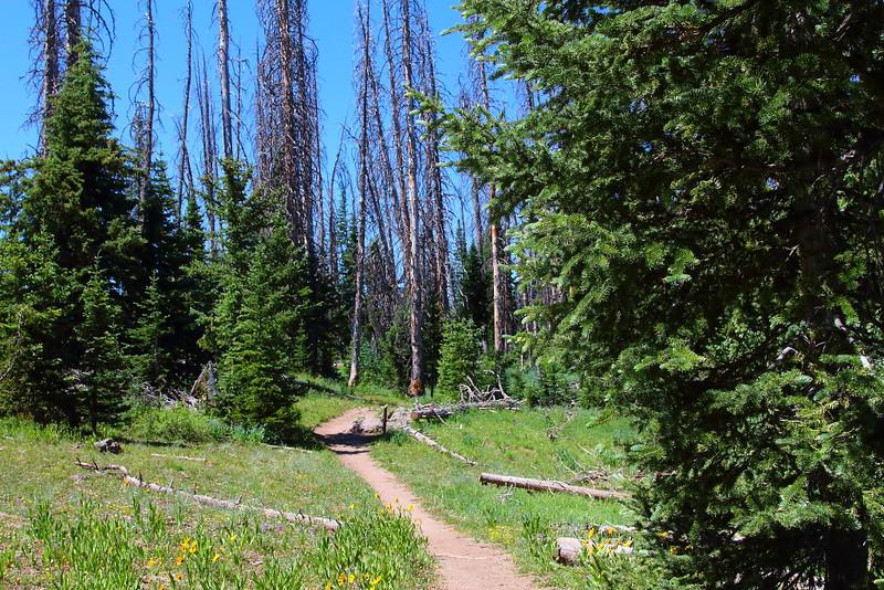 IMG_4900 Alpine Pond Trail