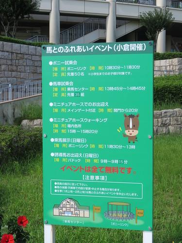 小倉競馬場本場開催時の馬との触れ合いイベント