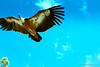 Adler by christianzengel