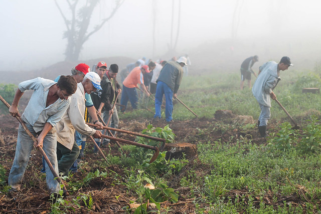 Trabalhadores rurais entregavam  produção para o Programa de Aquisição de Alimentos (PAA) - Créditos: Welligton Lenon
