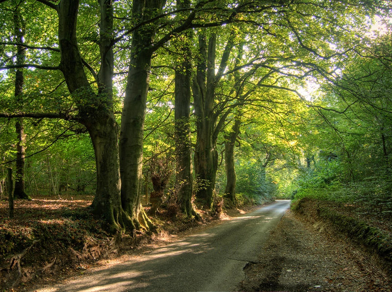Road through the Crab Wood, near Winchester, UK. Credit Neil Howard, flickr