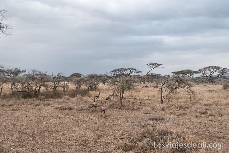 parque nacional serengueti