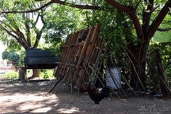 AquidSela 160616 039 Selaria Renascer rua carroceria caminhão galinha boa