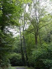 Gorges de la Save - Photo of Sarremezan