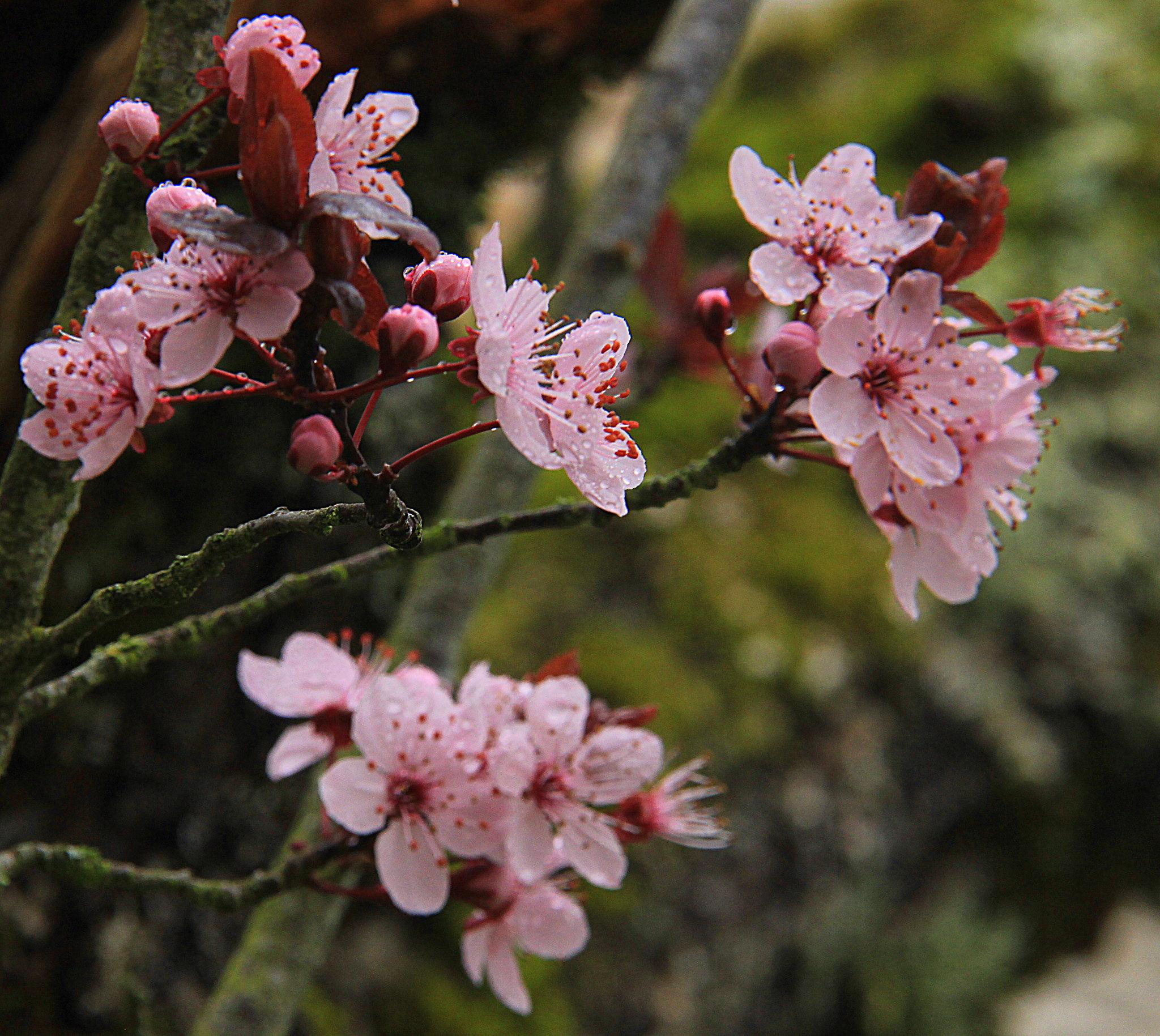 flowers blooming in spring in dordogne