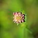 Some Special Flower by Rolf-Schweizer