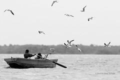 Amigos de los pescadores / Fishermen friends