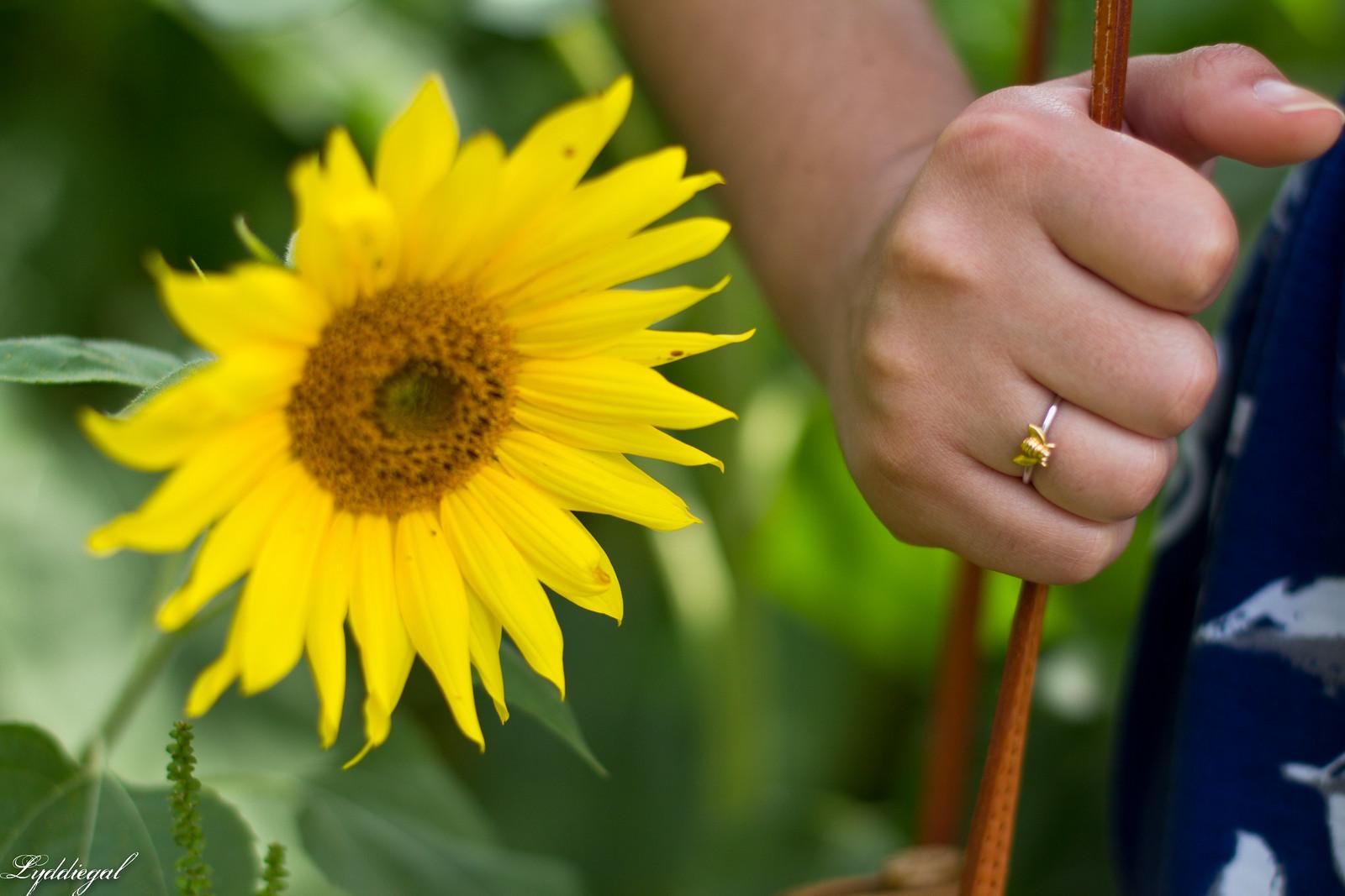 82d47301ed53f ... blue floral maxi dress, round rattan bag, straw hat, sunflower field-10  ...