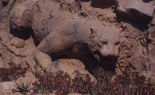 Sun City. Pilansberg north west of Pretoria. Leopard and plants. November 1994