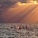Small sailboats at Sunset - Tel-Aviv beach by Lior. L