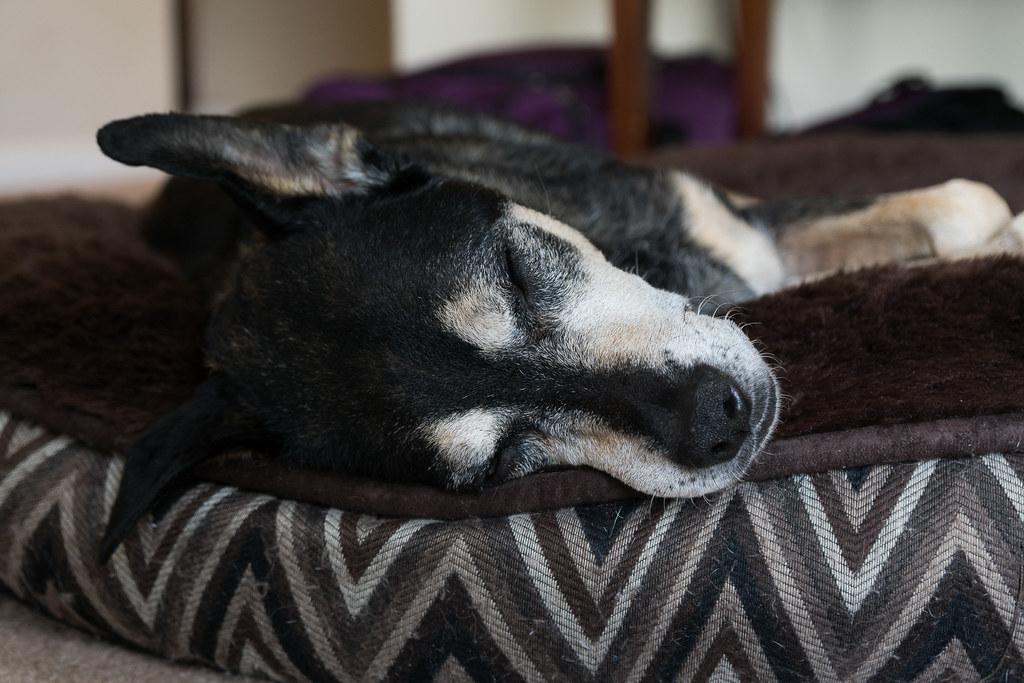 A dog sleeps on a dog bed