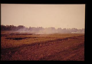 Burning Rice Straws left In The Fields = 残ったわらを焼いているところ